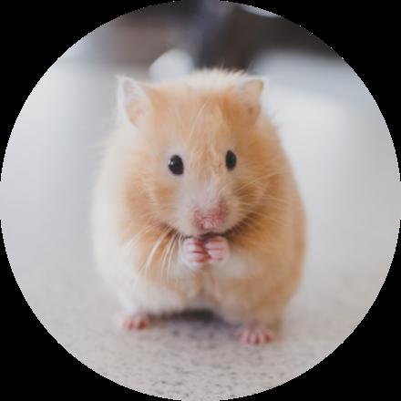 Imagen de un hamster